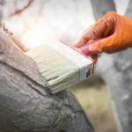 Фарба для деревини